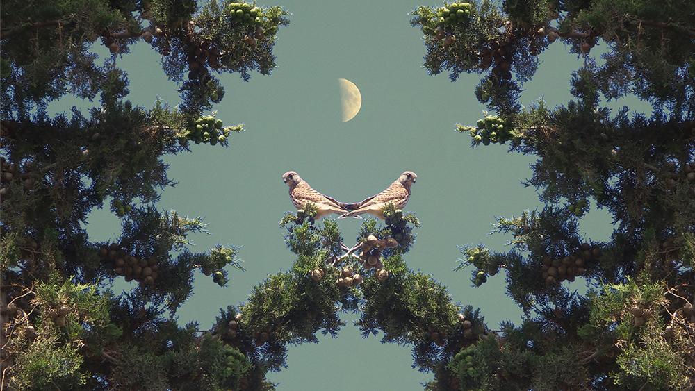 בז כפול חצי ירח